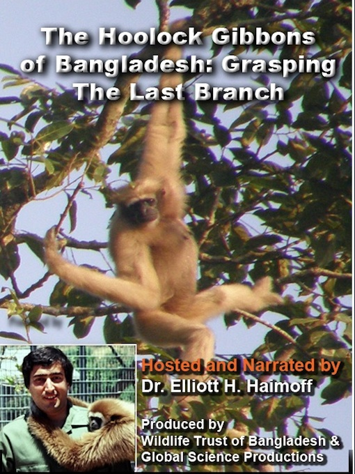 Hoolock Gibbons: Grasping the Last Branch